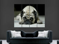 PUG DOG CUTE  ART WALL LARGE IMAGE GIANT POSTER !