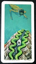Giant Marine Clam & Diver     Illustrated Vintage Card  ## EXC