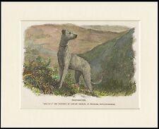 SCOTTISH DEERHOUND OLD STYLE DOG HIGHLAND SCENE DOG PRINT MOUNTED READY TO FRAME