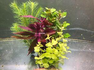 25 Aquariumpflanzen Wasserpflanzen Aquarium Pflanze Pflanzen Mix (€0,60/Stk)