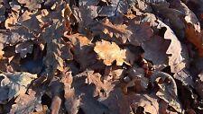 200+ essiccati foglie di quercia PESCI TROPICALI Anfibi Rettili Terrario Acquario