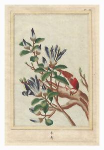 Original Antique c.1776 PIERRE JOSEPH BUCHOZ Engraving - Pl. IX FLOWERS OF CHINA