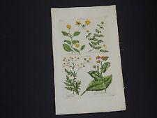Sir John Hill, Botanical, The Vegetable System 1761-1775 Swamp Flower #14
