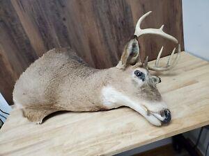 Deer Head Taxidermy Mount 8 Point Antlers