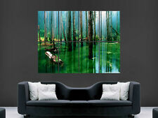 FLOODED FOREST  TREES BEAUTIFUL  WALL LARGE IMAGE GIANT POSTER