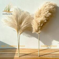 Real Pampas Grass Decor Natural Dried Flowers Plants For Wedding Dry Flower