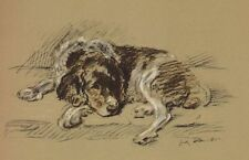 Welsh Springer Spaniel - Lucy Dawson Dog Print - Matted