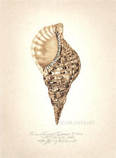 Seashell TRITONS TRUMPET original SIGNED limited edition hand worked SEPIA print