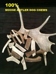 Best Price (1 KG) Moose Antler Chews For Dogs All Sizes 100% Natural - Calcium