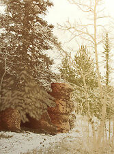 "Paula Crane ""Spruce Tree Pt."" Hand Signed & Numbered Artwork Etching MAKE OFFER!"
