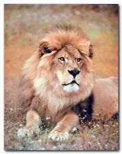 African Lion Wild Animal Wall Decor Art Print Poster (8x10)