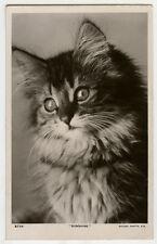 c 1910 Kitten British Sunshine Cat vintage photo postcard