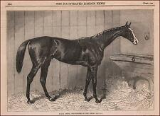 BLAIR ATHOL, Racehorse, Sire, winner Epsom Derby & St. Leger, original 1864