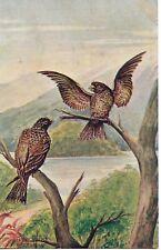 AUSTRALIAN ALPINE EAGLES ART SERIES POSTCARD