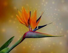 METAL FRIDGE MAGNET Bird Of Paradise Flower Orange Blue Red Flowers