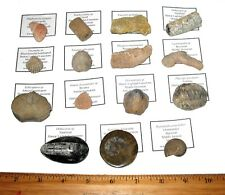 More details for fossil collection good large specimens corals shells trilobite ammonite 15 types