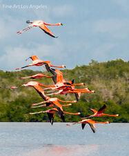 Neil Reichline Photo, Flamingos Flying, Laguna de Guanaroca, Cienfuegos,  Cuba