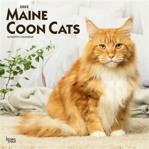 Maine Coon Cats 2022 Square (Calendar)