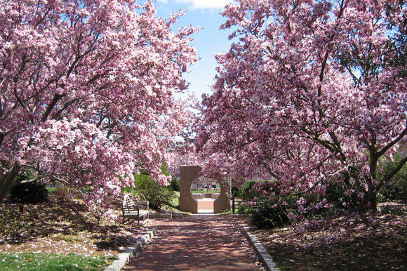 The Magnolia Place