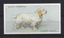 1937 UK Arthur Wardle Dog Art Body Study Wills Cigarette Card CLUMBER SPANIEL