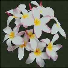 White Plumeria  Counted Cross Stitch COMPLETE KIT #20-128