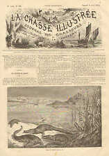 Hunting Caiman, Cayman, Gators, Vintage 1872 French Antique Art Print,