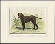 CURLY COATED RETRIEVER GREAT OLD STYLE PRINT OF NAMED DOG MOUNTED READY TO FRAME