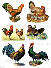 FURNITURE CHICKEN POULTRY DECAL SHABBY CHIC FRENCH IMAGE TRANSFER VINTAGE LABELS