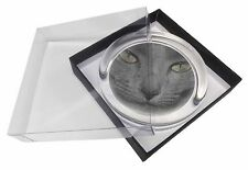 Grey Cats Face Close-Up Glass Paperweight in Gift Box Christmas Present, AC-82PW