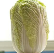 500 pcs Shandong Chinese Cabbage seeds High yield  easy to sow Green Food