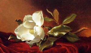 ZWPT252 charm 100% hand-painted white flowers decor art oil painting on canvas