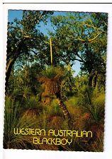 Postcard: West Australian Blackboy, Western Australia