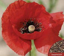 Mohn Roter Klatschmohn einjährig Höhe 70 cm Samen