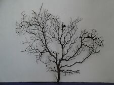 "14.2"" x 13.8"" Large Black Gargonia Sea Fan Fish Tank Seashells Reef Coral"