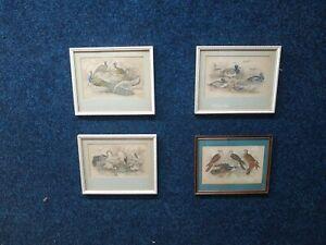 Set of 4 Bird picture -  etching By J Bishop, Original Print/Bookplate