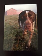 German Shorthaired Pointer Walter Barnyard Notecards (Pack of 3) GSP