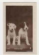 Dogs, Peter and Paul, Regent Series Real Photo Postcard #2, B359