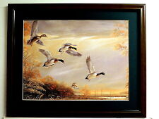 MALLARD DUCK PICTURE WATERFOWL DUCK HUNTING MATTED FRAMED 16X20