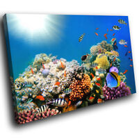 A536 Ocean Coral Reef  Fish  Funky Animal Canvas Wall Art Large Picture Prints