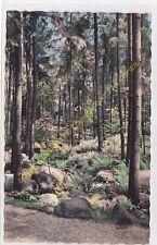 CPSM 92370 BOULOGNE SUR SEINE les Jardins Albert Kahn forêt Vosgienne Edit AC