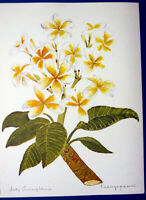 FRANGIPANI HAWAIIAN LEI FLOWER TEMPLE TREE ~ Floral Botanical Tropical Art Print