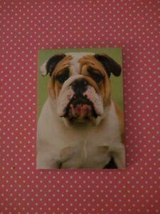 English bulldog Note Pad