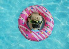 A1| Pool Party Pug Puppy Poster Size 60 x 90cm Cute Animal Poster Gift #16011