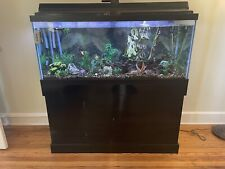 75 gallon aquarium with Fish, Decorations, And Filter