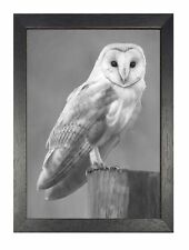 Beautiful Barn Owl POSTER Black and white print a3 Size picture
