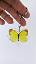 Butterfly Rare Key Chain Yellow Real Pendant In Clear Resin Moth Key ring Charm