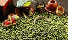 1/4 Pound MUNG Bean Seeds. Sprouting~Shell. Asian Cuisine. Premium USA Heirloom