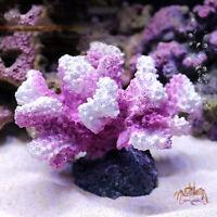 Simulation Korallenriff Rosa Klein Künstliche Pflanze Aquarium Ornament Fishtank