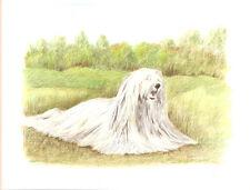 Komondor Open Edition Art Print by Usa Artist Barbara Walker -e