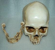 1:1 Real Life Human Anatomy Skull Skeleton Education Resin Replica Medical Party